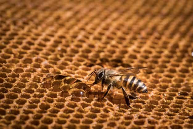 Beeswax Furniture Polish Recipe
