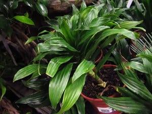 air detoxifying plants